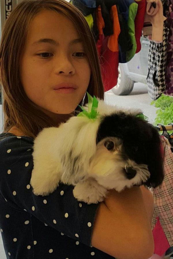 Cute-pooch-grooming