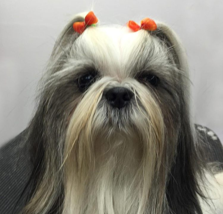 Dog Detail Grooming